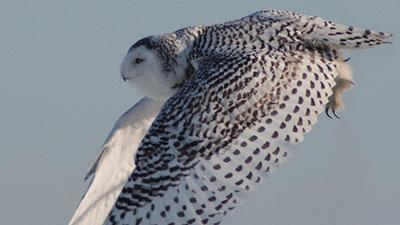 Part 4. 생체모방의 대명사, 깃털