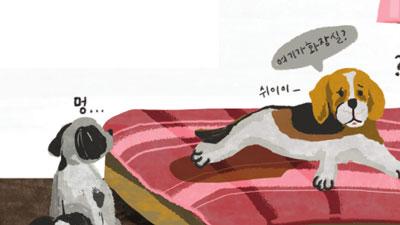 [반려동물 고민상담소] 개도 치매에 걸리나요?