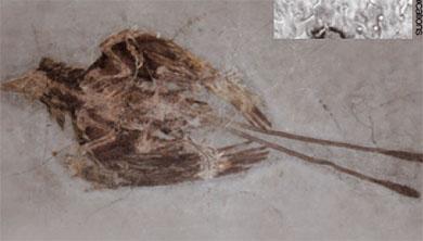 [과학뉴스] 1억 2500만 년 전 비듬의 주인은?