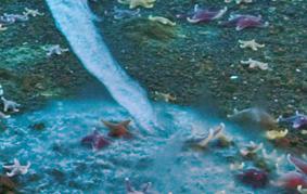 [쇼킹 사이언스] 바닷속 고드름이 살아있다?! 브리니클