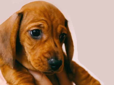 [실전!반려동물] 어린 댕댕이는 사회에 적응 중?