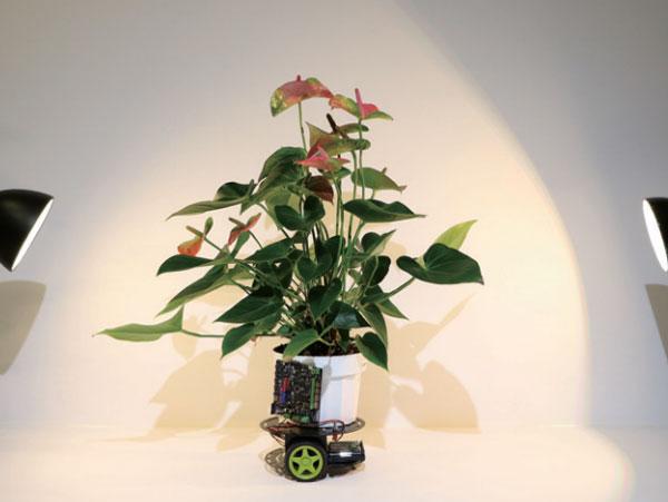 [과학뉴스] 스스로 움직이는 식물 '엘로완'