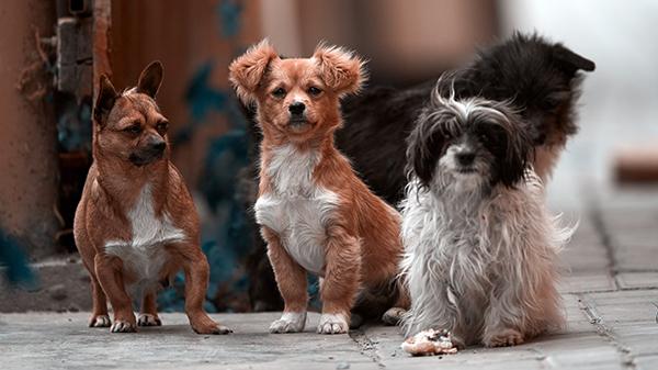 [시사과학] 동물보호단체 케어, 개 수백 마리 안락사 시키다