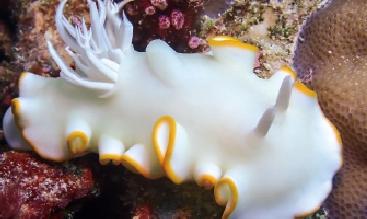 [포토뉴스] 쌍곡면으로 바다 민달팽이처럼 움직이는 로봇 만든다