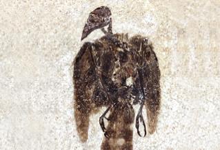 [과학뉴스] 깃털이 생생! 5200만 년 전 참새 화석