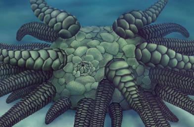 4억3000만 년 전 해삼의 조상 화석 발견