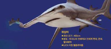 상어가족, 백상아리만 있는 게 아니야