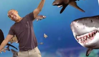 상어가족, 지구 반대편에서도 인기 만점!