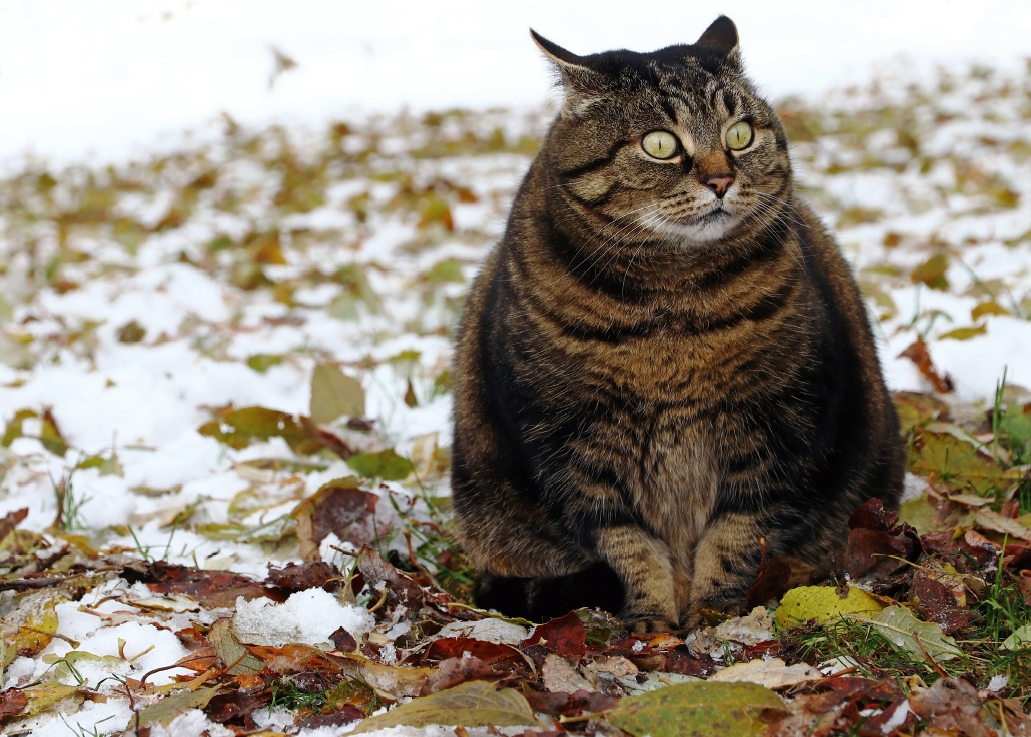 [실전! 반려동물] 안절부절못하는 고양이, 때가 왔다