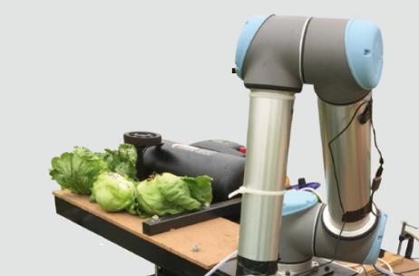 [과학뉴스] '덜 자랐군, 패스~'양상추 수확하는 AI 로봇 개발