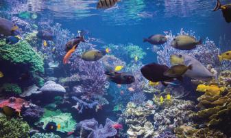 [포토뉴스] 바다 생태계 균형 수학이 책임진다!