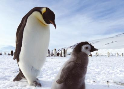 [화보] 지금 이곳은 한겨울, 남극풍경