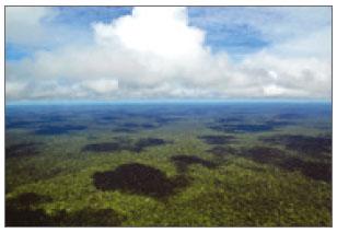 [과학뉴스] 열대 지방의 배신, 이산화탄소를 배출한다고?