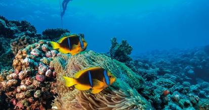 [수학뉴스] 물고기의 움직임 포착해해양 생태계 지킨다