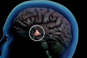 [과학뉴스] 머리 많이 쓰면 단명한다?