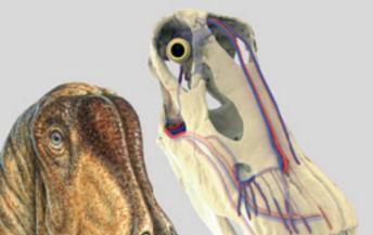 [과학뉴스] 거대 공룡이 뇌를 식힌 방법은 침?