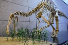 50년 만에 첨단 CG로 부활한 거대 타조공룡 데이노케이루스