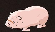 [Q&A] 아프리카돼지열병 팩트체크