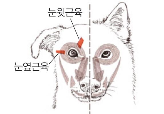 [과학뉴스] 개의 눈이 선한 이유는?