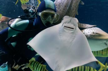 [출동!기자단] 수중 동물 친구들을 만나러 출동!