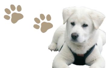 [출동!반려동물] 동물 행동 훈련으로 반려견의 마음을 살핀다!