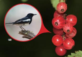 [식물 속 동물 찾기] 까치가 좋아하는 음식은? 까치밥나무