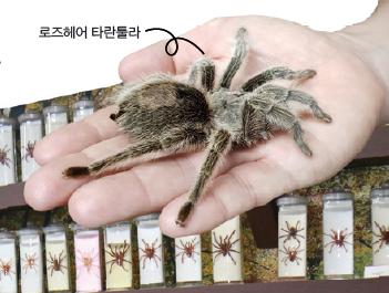 [현장취재] 스파이더맨들 모여라! 거미 특별탐사