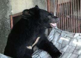 해먹 달기 대작전! 사육곰에게 놀이를 선물하다