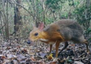 [가상인터뷰] 쥐사슴, 그동안 어디 있었니?