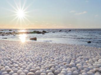[과학뉴스] 핀란드 해변을 덮은 몽글몽글한 알의 정체는?!