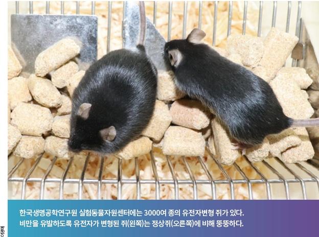 [신년기획] 내 이름은 '쥐D', 인간 질병 대신 앓쥐, 그렇게 인류를 구하쥐