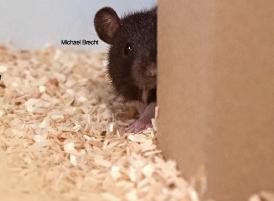 잘 찾쥐! 놀 줄 알 쥐!