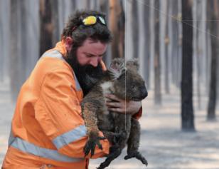 호주 산불로 파괴된 숲, 돌아올 수 있을까?