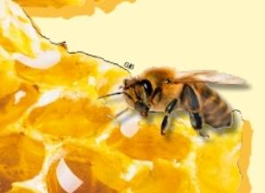 수학이 가득한 벌집, 곤충계의 건축 박사꿀벌을 만나다!