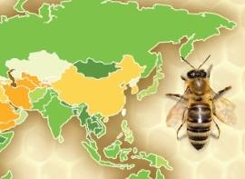 [그래픽뉴스] 세계 벌의 날, 곤경에 처한 동물 매개자들