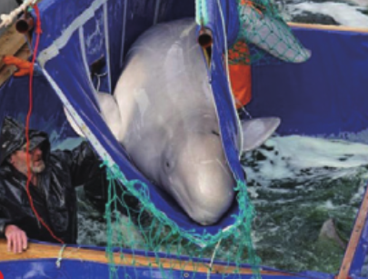 [잡히다] 고래 감옥의 비극이 드러나다!