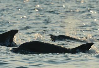 [돌아가다] 고래를 보고 싶다면 바다로!