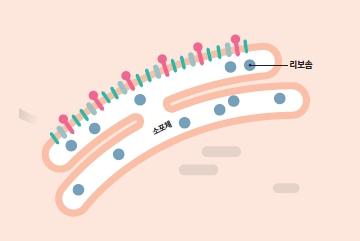 STEP ④ 새로운 바이러스 조립