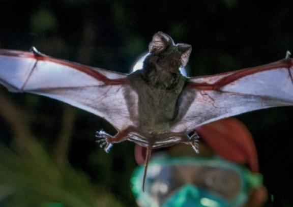 바이러스 사냥으로 미래 유행할 전염병을 예측한다!