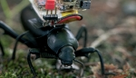 [한페이지 뉴스] '전지적 곤충 시점' 보여주는 로봇 카메라