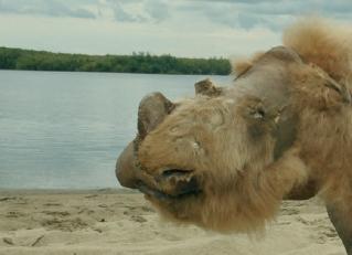 [한페이지 뉴스]털코뿔소 멸종은 인간 아닌 '이것' 때문