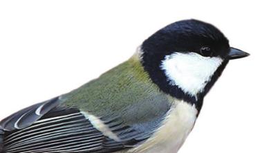 [팩트체크] 인공물과 새의 충돌, 막을 수는 없을까?