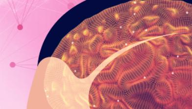 '남자 뇌' '여자 뇌' 는 타고난다? 100년 연구결과는