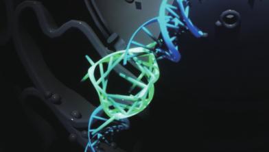네가닥으로 꼬였다! DNA 4중나선