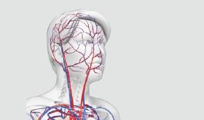 [한페이지 뉴스] 우리 몸의 엔진, 심장의 연료는?