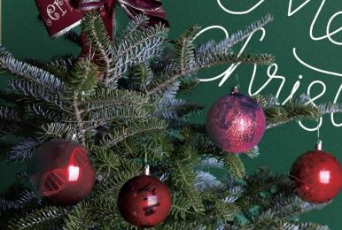 크리스마스 트리가 한국산? 멸종위기 구상나무를 구하라!
