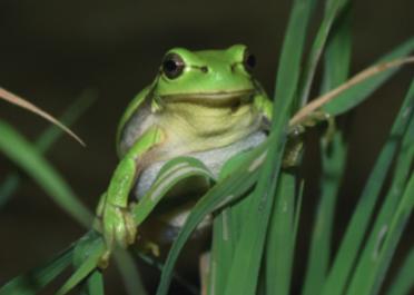 [과학뉴스] 지구사랑탐사대, 신종 개구리 발견!