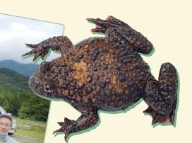 [현장취재] 무당개구리의 비밀