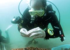 [한장의 과학] 바닷속에 아파트가 있다?! 산호의 러브하우스