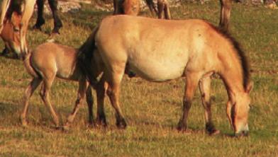 [과학뉴스] 비상! 약 50년간 야생 척추동물 수 2/3 줄었다?